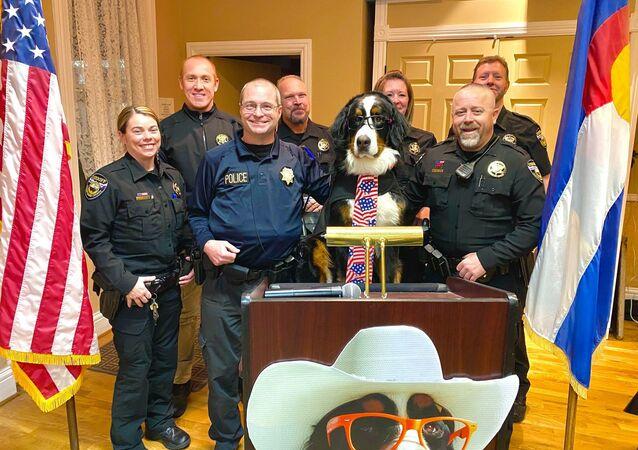 Parker the Snow Dog ha prestato giuramento ufficiale come sindaco onorario di Visit Georgetown, in Colorado, il 18 febbraio ~