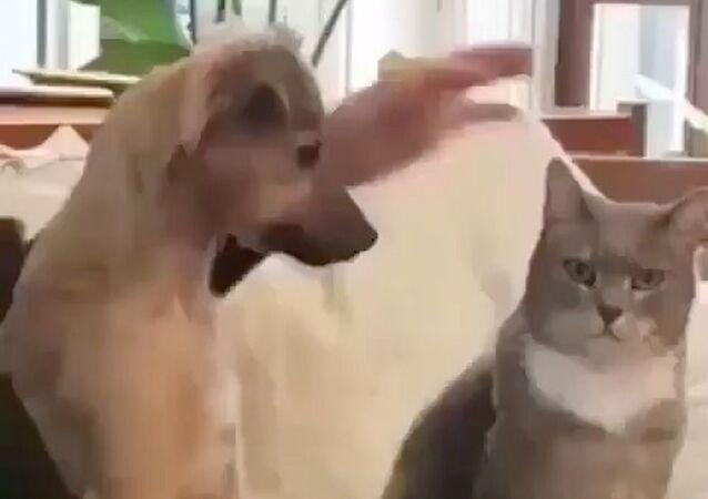 Le emozioni di un gatto accarezzato da un cane colpiscono il web