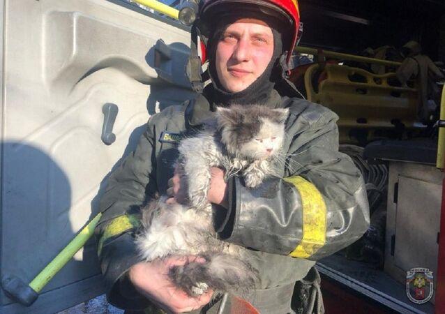A Mosca pompieri salvano 5 persone e 1 gatto da incendio in appartamento