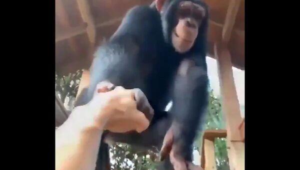 Tenera scimmietta fa strada a un uomo - Video - Sputnik Italia