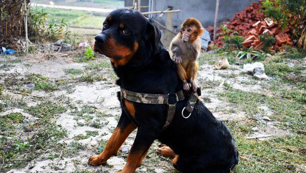 Un cane e una scimmia - Sputnik Italia