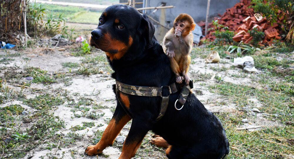 Coronavirus: cani e gatti non sono un rischio