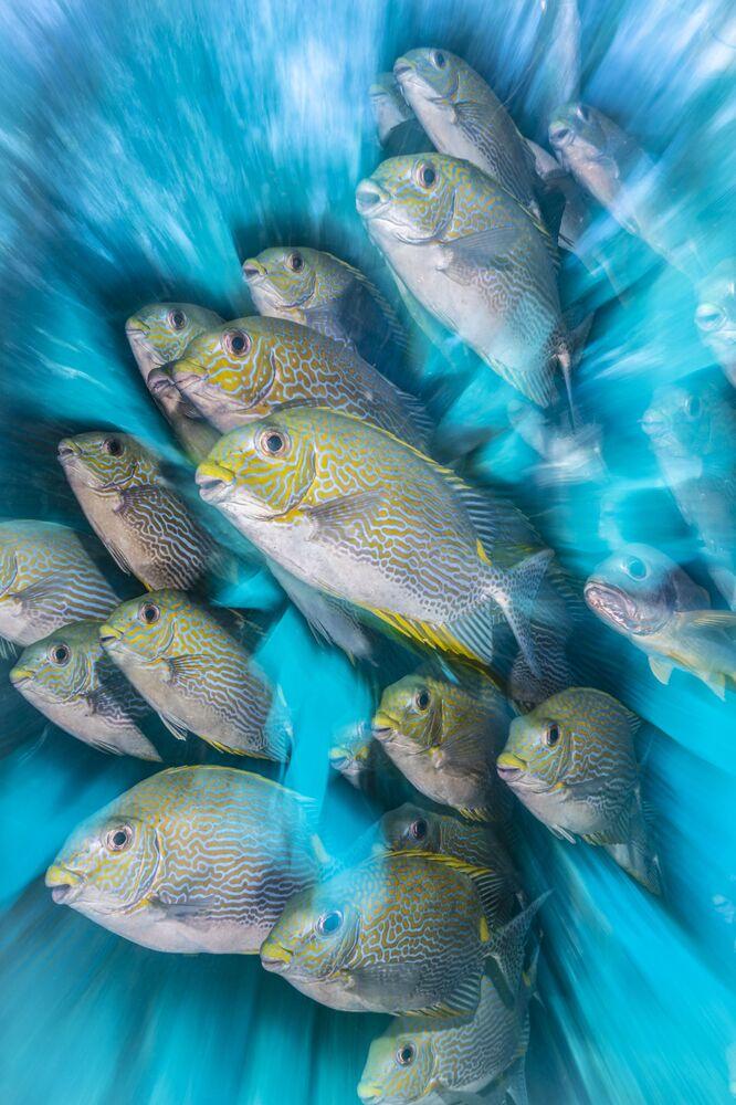 Lo scatto Rabbit Fish Zoom Blur del fotografo britannico Nicholas More raffigura un banco di pesci conigli.