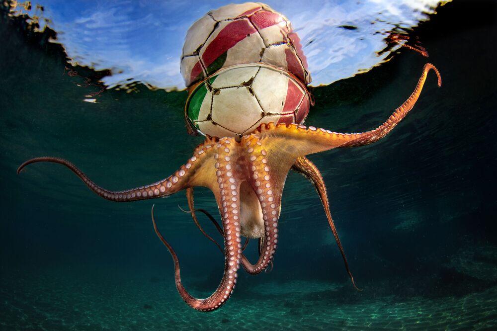 L'allenamento del polpo (Octopus Training) dal fotografo italiano Pasquale Vassallo.
