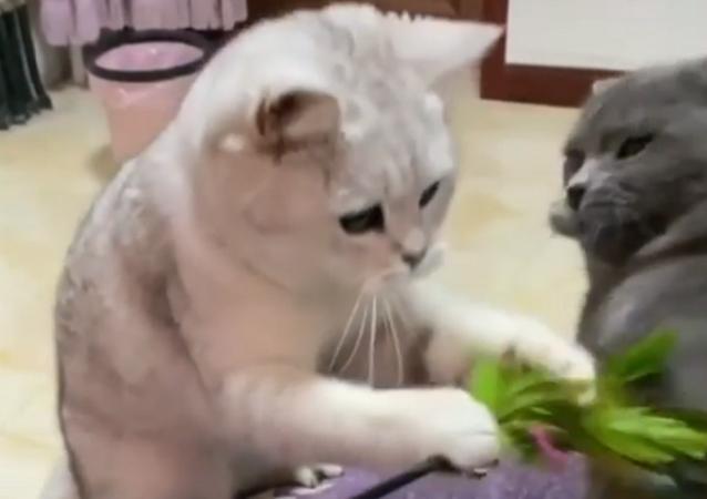 La slow-motion di una zuffa tra due gatti giocherelloni fa impazzire il web