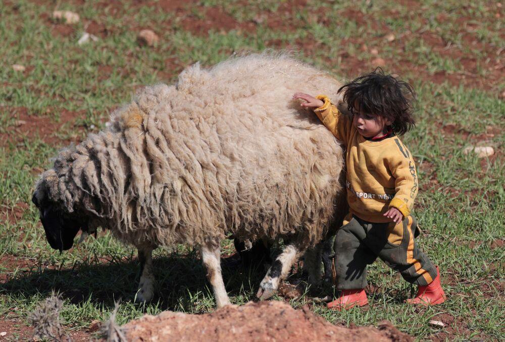Un bambino siriano gioca con una pecora ad Azaz, Siria