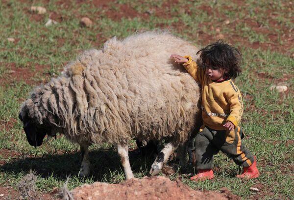 Un bambino siriano gioca con una pecora ad Azaz, Siria - Sputnik Italia