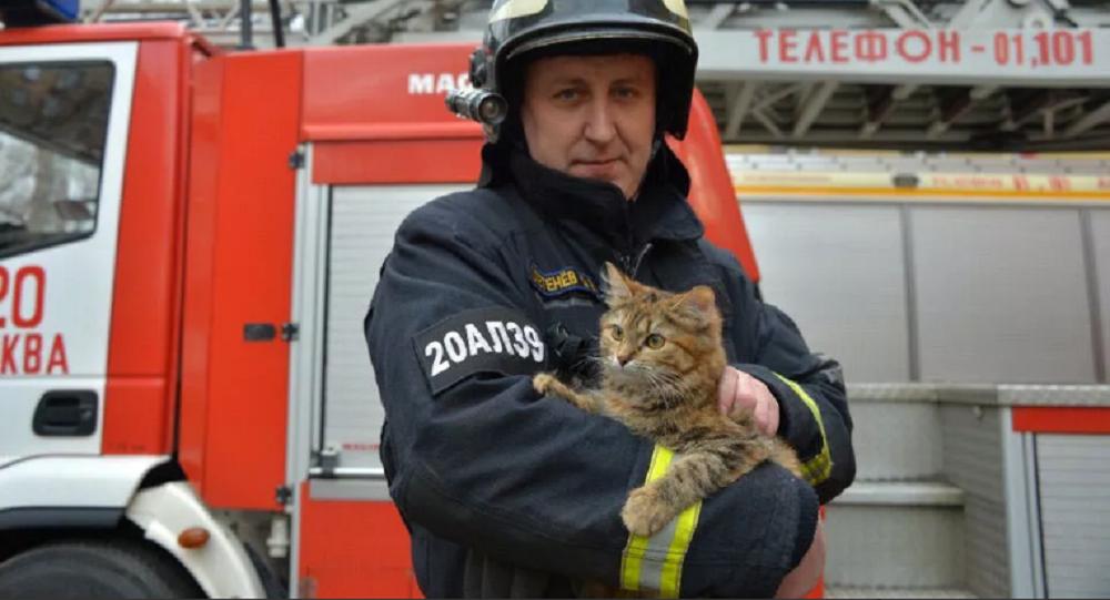 Pompiere con un gatto