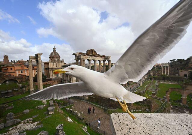 Gabbiano sullo sfondo dei Fori Imperiali a Roma