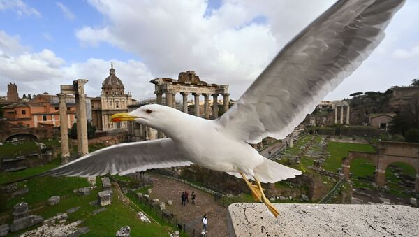 A seagull flies near the Ancient Forum in Rome in March 2020 - Sputnik Italia