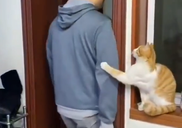 Un gatto insolitamente bonario stupisce la Rete