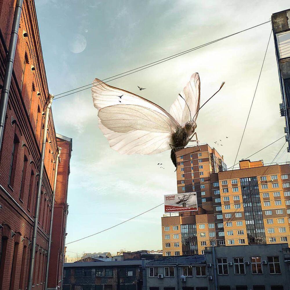 Una farfalla gigantesca a San Pietroburgo nell'opera dell'artista russo Vadim Solovyov.