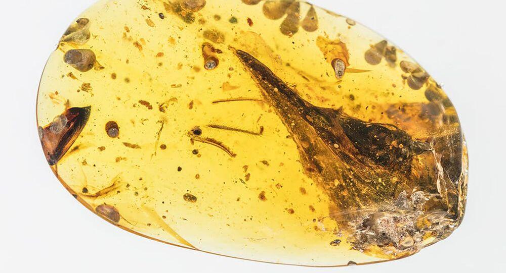 Cranio di un dinosauro in un pezzetto d'ambra