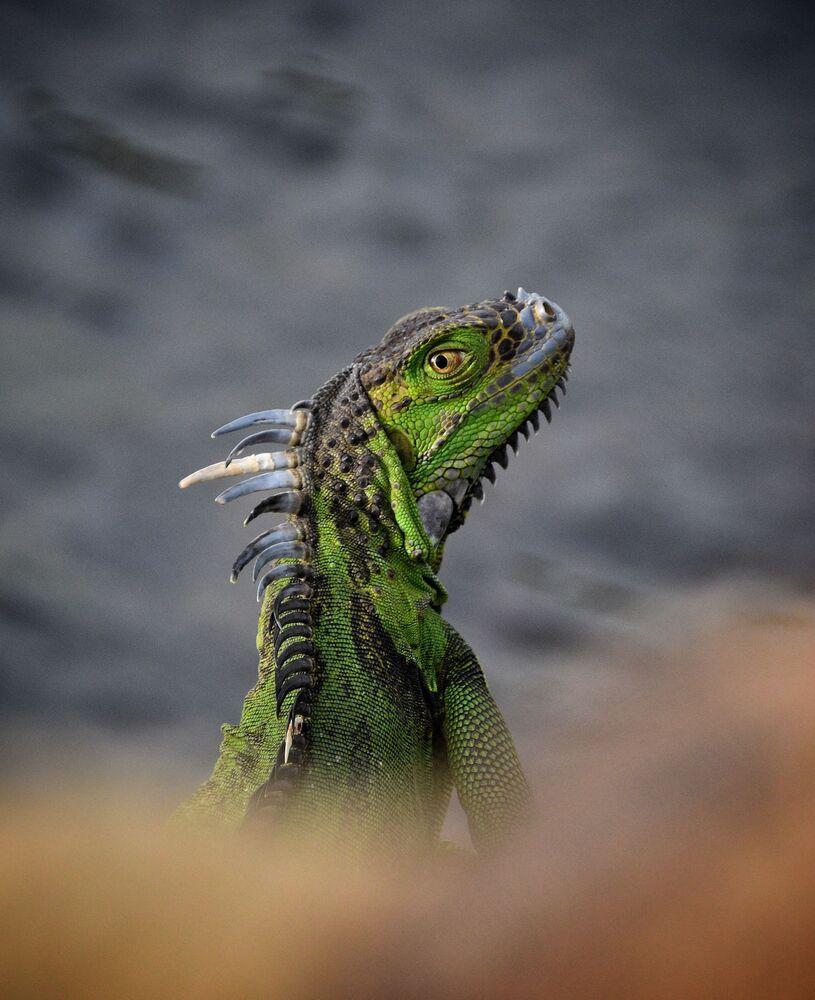 Lo scatto What A Personality! del fotografo australiano Mac Sealy.