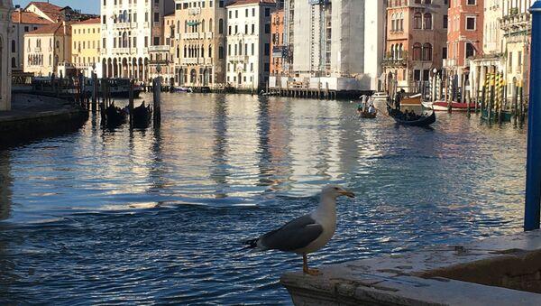 Canale grande di Venezia - Sputnik Italia