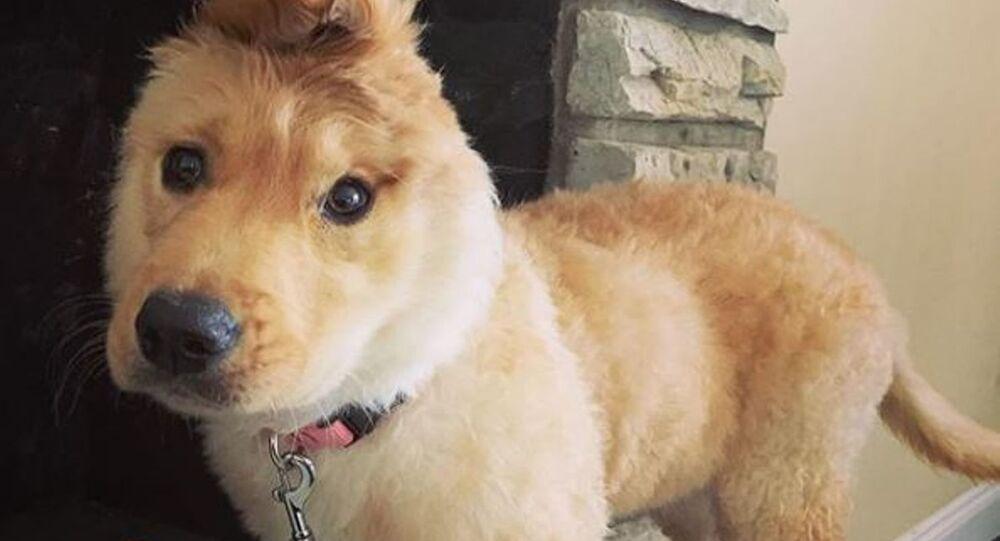 Rae, il cane con un solo orecchio
