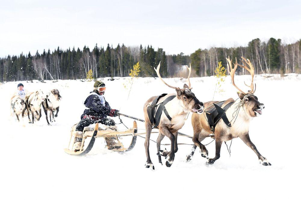 Gli abitanti partecipano alla corsa con le renne in Jamal, Russia.