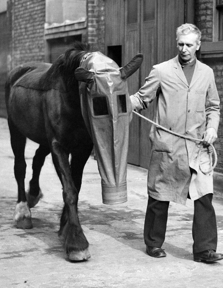 Una maschera antigas per i cavalli come protezione dagli attacchi di gas tossico, Londra, 1940