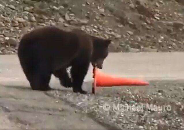 Un orso che fa il buon cittadino