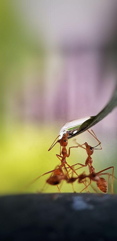 Lo scatto Thirsty ants (Formiche che hanno sete) del fotografo filippino divenuto il vincitore del concorso The World's Best Photos of #Water2020