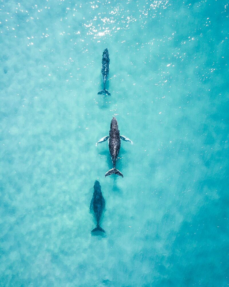 Lo scatto Spotting these 3 cruising up the coast made my day di un fotografo australiano al concorso The World's Best Photos of #Water2020.