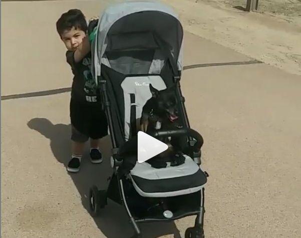 Un bambino porta a spasso il cane con il passeggino