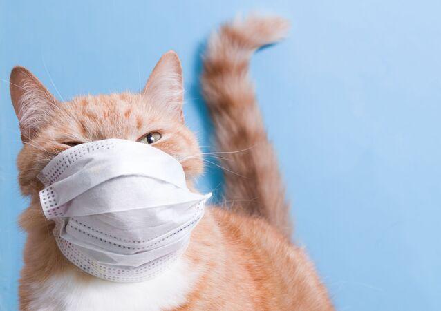 Un gatto in una mascherina protettiva