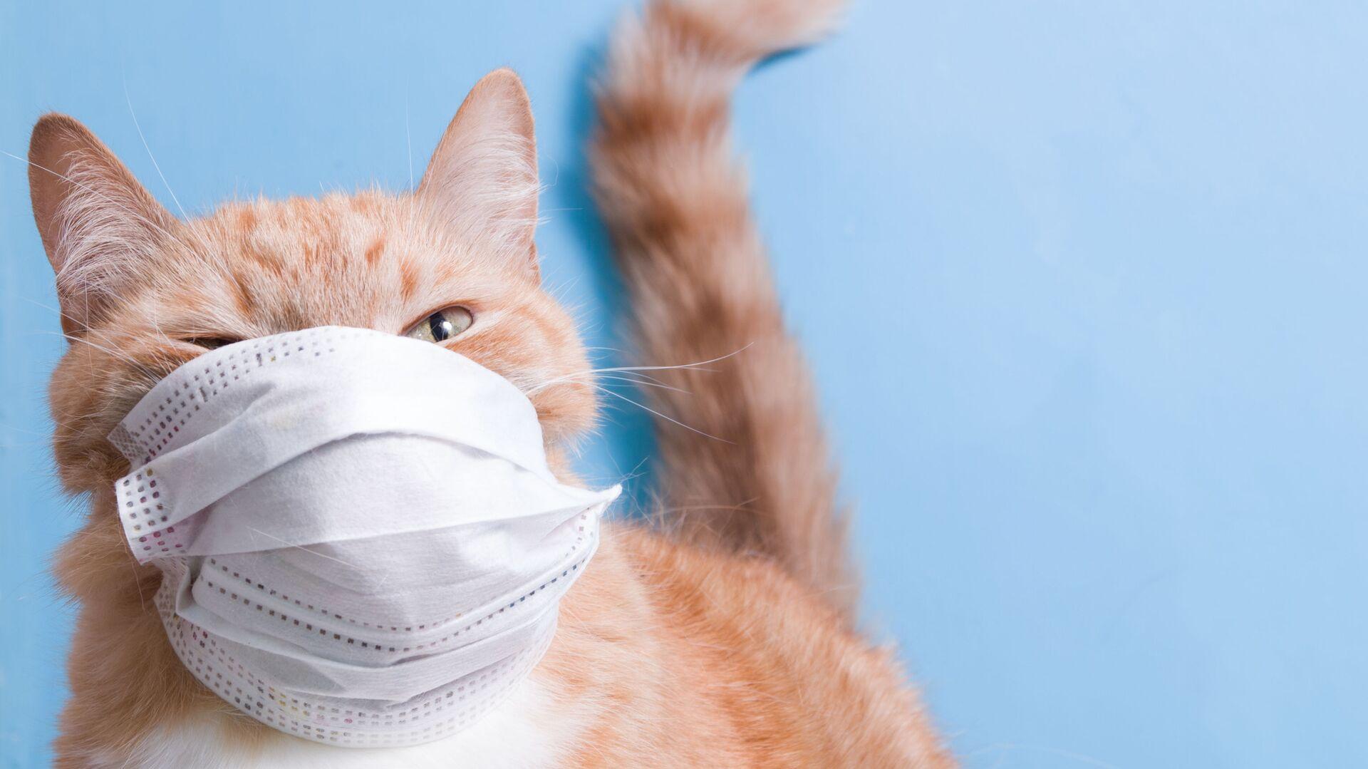 Un gatto in una mascherina protettiva - Sputnik Italia, 1920, 18.03.2021