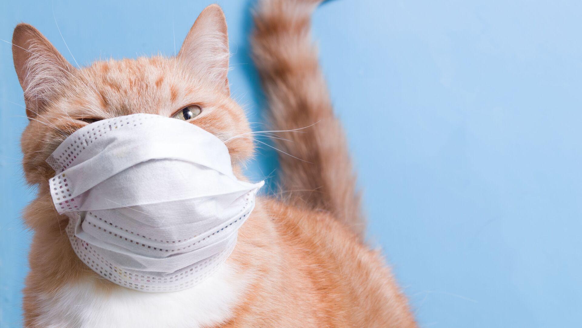 Un gatto in una mascherina protettiva - Sputnik Italia, 1920, 05.04.2021