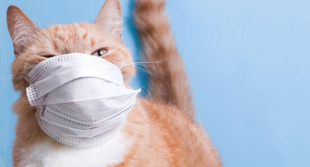 Un gatto con una mascherina
