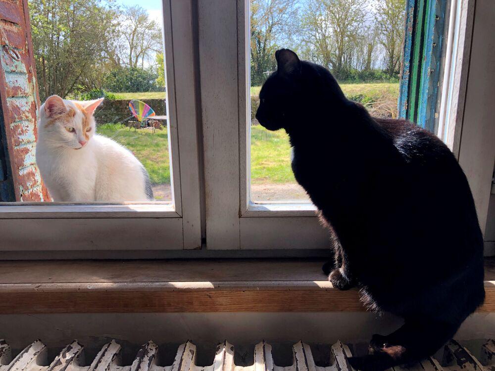 Un gatto nero domestico guarda un gatto seduto fuori dalla finestra, nel villaggio di Blecourt durante le restrizioni imposte per rallentare la pandemia del nuovo coronavirus (COVID-19), Francia, il 29 marzo 2020