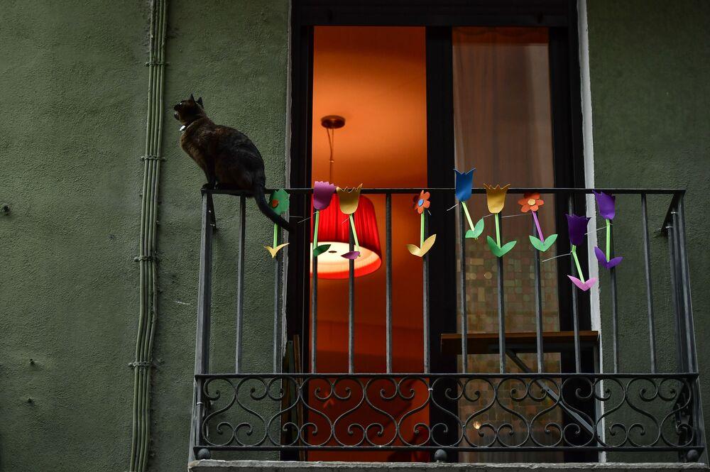 Un gatto siede su un balcone a Pamplona, nel nord della Spagna, giovedì 2 aprile 2020