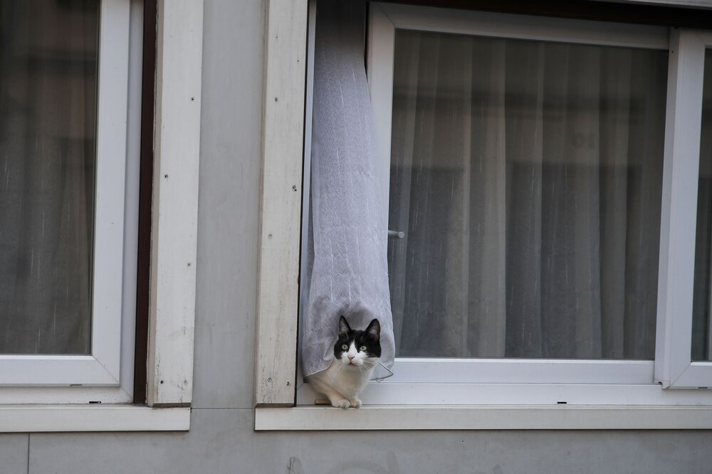Un gatto si affaccia sulla strada da una finestra a Parigi, il 5 aprile 2020