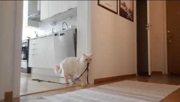 Il gatto che sarebbe disposto a farsi l'autocertificazione pur di uscire di casa - Sputnik Italia