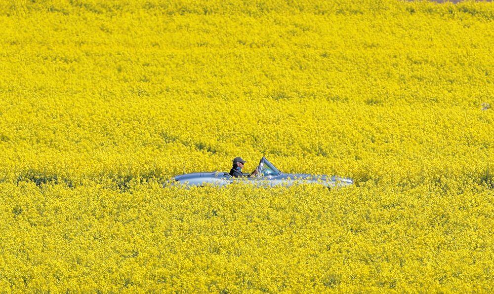 Un uomo sta attraversando in macchina un campo in fioritura in Svizzera.