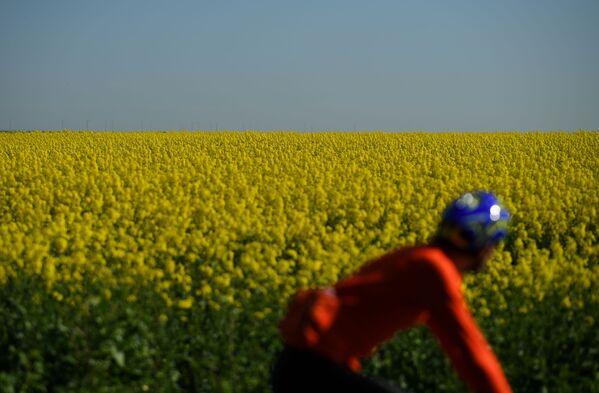 Un ciclista passa un campo di fiori in Gran Bretagna - Sputnik Italia
