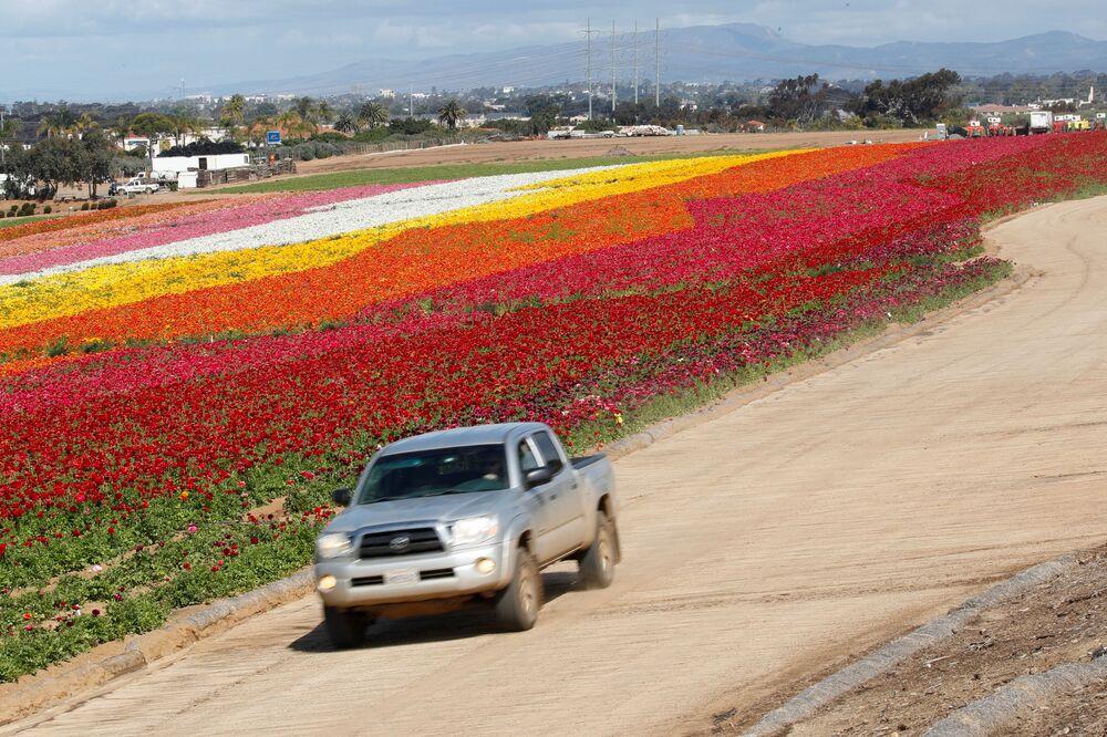 Campi in fiore in California, USA.