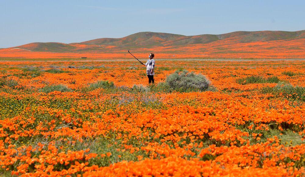 Una donna vista in un campo di papaveri in fiore in California, USA.