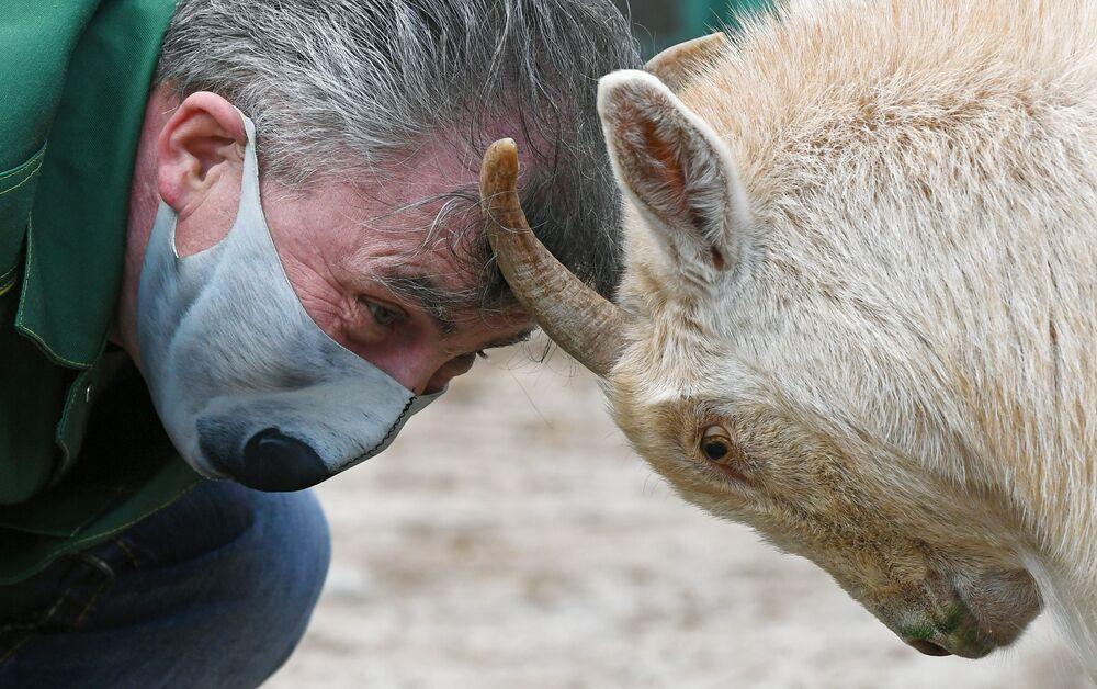 Oleg Chipura, impiegato dello zoo Roev Ruchey, gioca con una capra di nome Nikita a Krasnoyarsk
