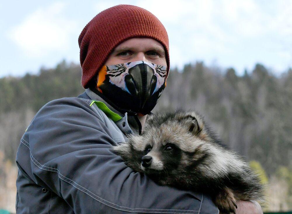 Zoologo del parco di flora e fauna di Roev Ruchey Evgeny Petrusev con un cane procione addomesticato di nome Motya a Krasnoyarsk