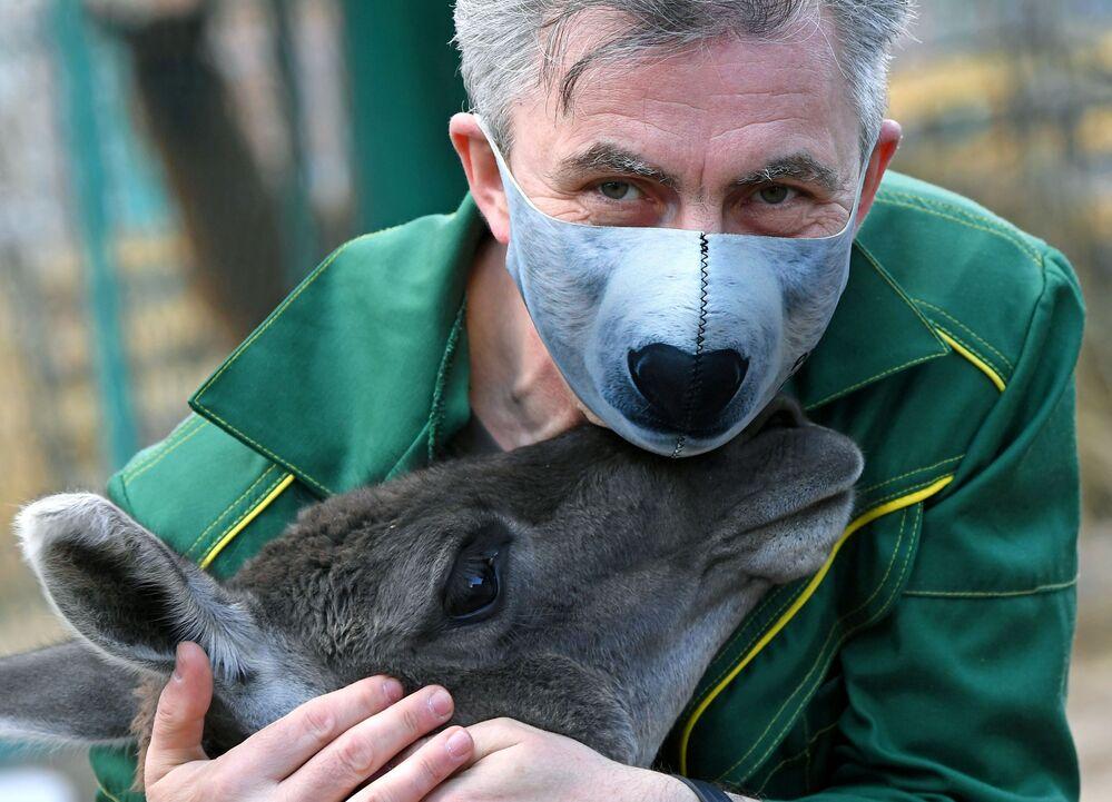 Oleg Chipura, impiegato del parco di flora e fauna di Roev Ruchey, gioca con un guanaco di nome Amigo a Krasnoyarsk