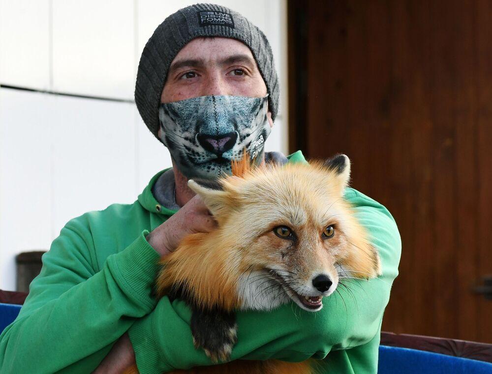Zoologo del parco di flora e fauna di Royev Ruchey Vyacheslav Barkalov con una maschera protettiva creativa con la volpe Ralph