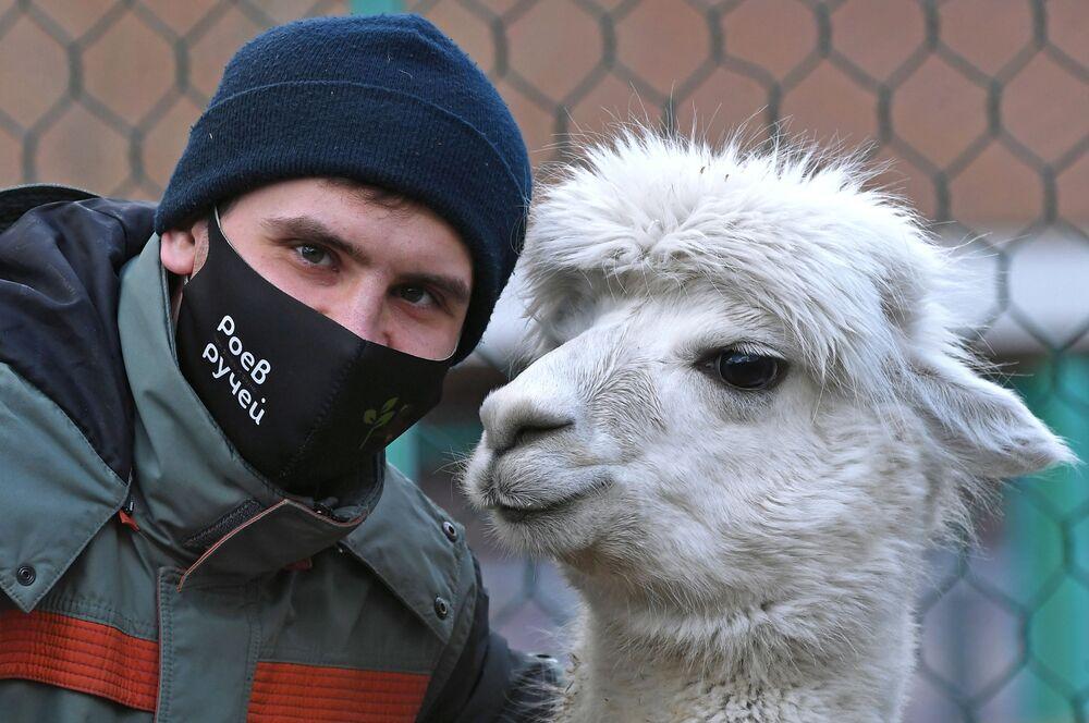 Zoologo del parco di flora e fauna di Royev Ruchey Semyon Pichuev con l'alpaca di nome Giulietta a Krasnoyarsk
