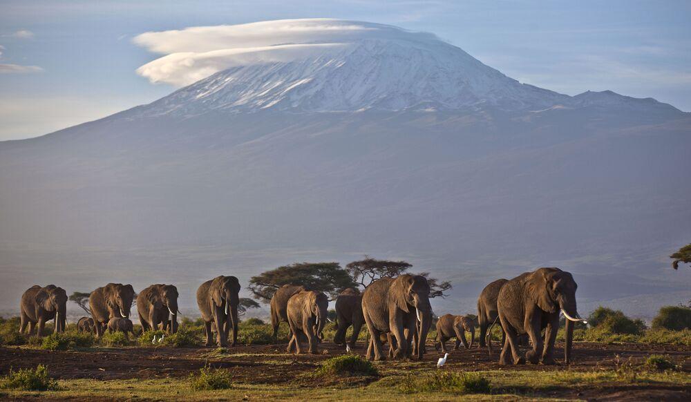 Il Kilimangiaro o Chilimangiaro, con i suoi tre coni vulcanici Kibo, Mawenzi e Shira, è uno stratovulcano in fase di quiescenza, situato nella Tanzania nordorientale