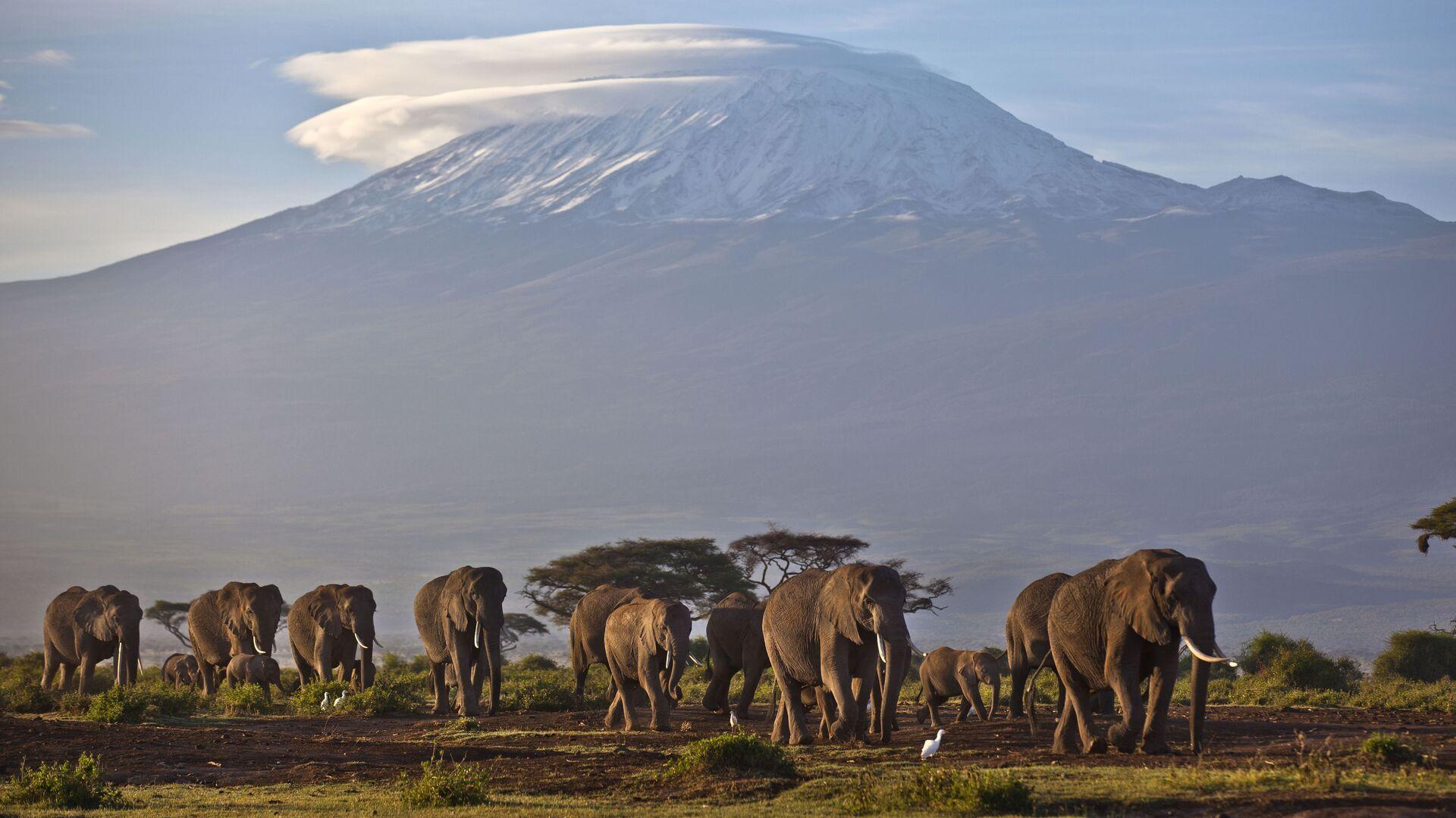 Стадо слонов на фоне горы Килиманджаро, Кения - Sputnik Italia, 1920, 17.05.2021