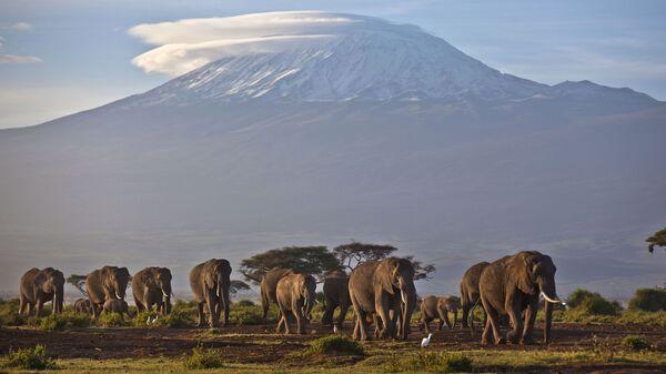 Стадо слонов на фоне горы Килиманджаро, Кения - Sputnik Italia