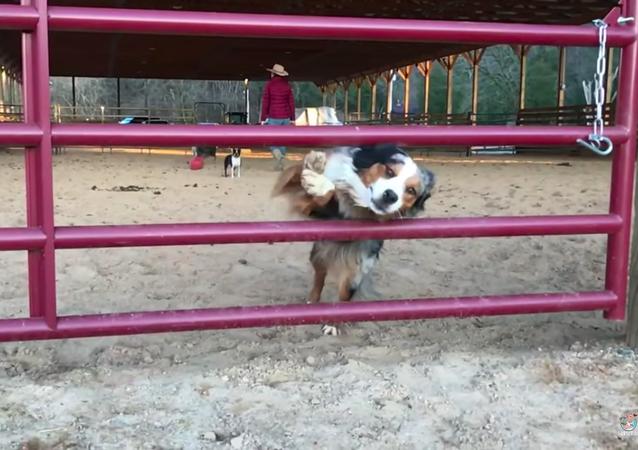 Dog jumps