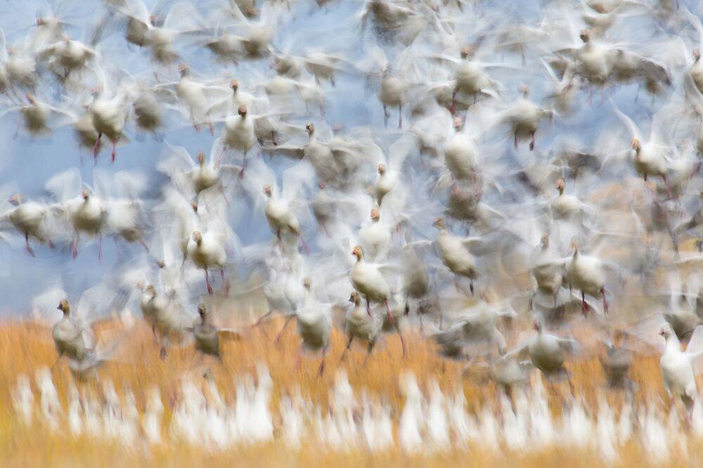 Lo scatto Il decollo di Flurin Leugger, al primo posto della categoria Uccelli.