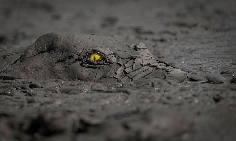 Lo scatto Pericolo nel fango di Jens Cullmann, vincitore nella categoria Altri animali.