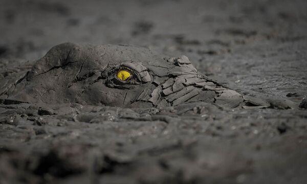 Lo scatto Pericolo nel fango di Jens Cullmann, vincitore nella categoria Altri animali. - Sputnik Italia